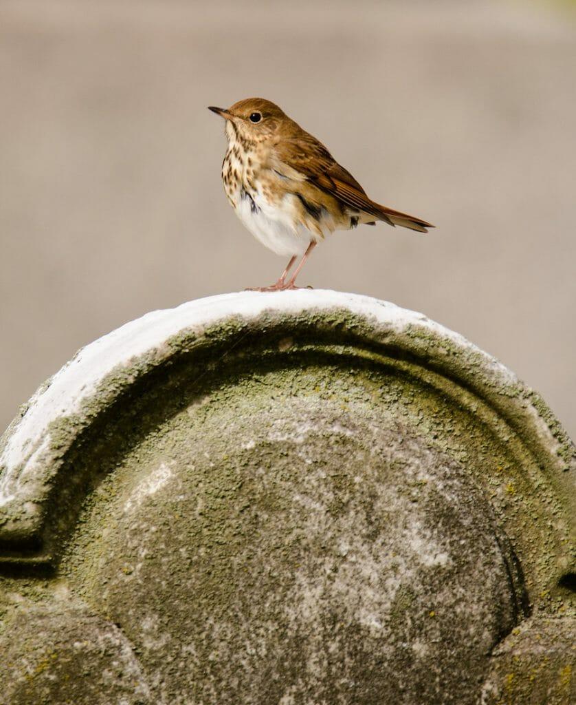 bird gravestone perch