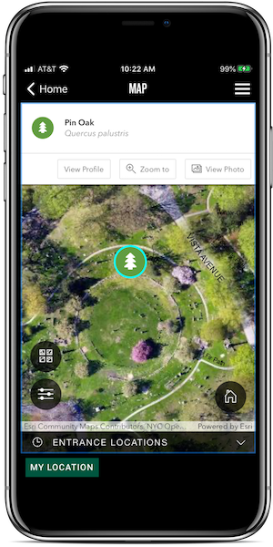 app tree map