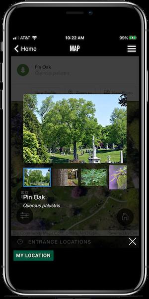 app tree slideshow